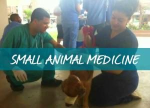 h-small-animal-medicine