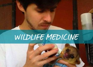 h-wildlife-medicine