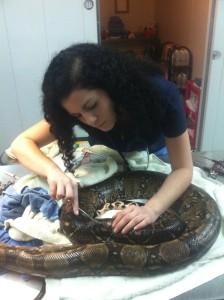 Reptile Medicine