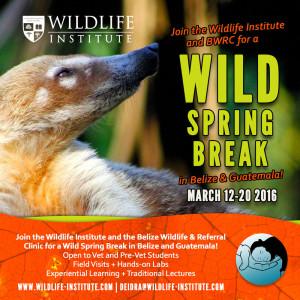 Wild-Spring-Break-2016