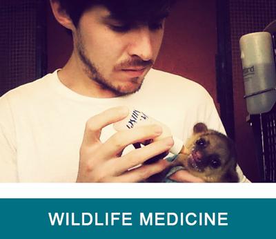 tab-wildlife-medicine