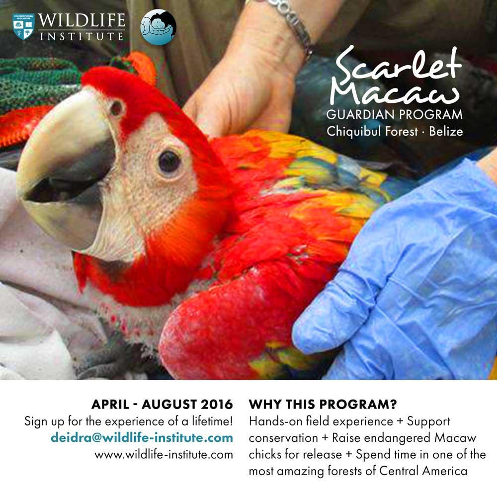 Scarlet-Macaw-Guardians