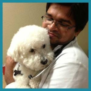Small Animal Medicine